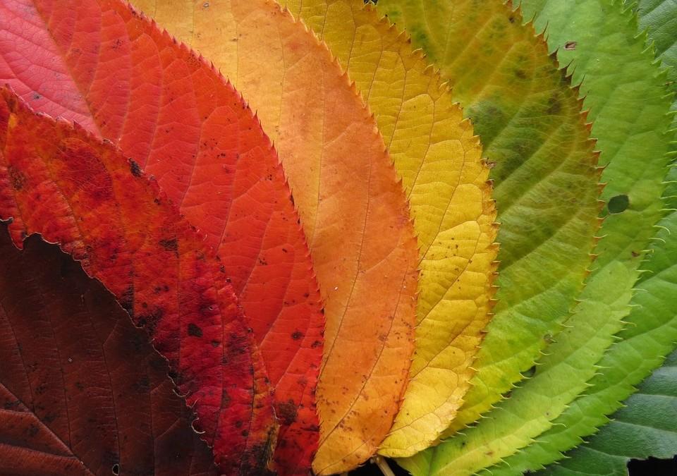 Jesień i Ty
