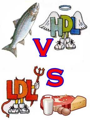 HDL i LDL czyli kilka słów apropo cholesterolu